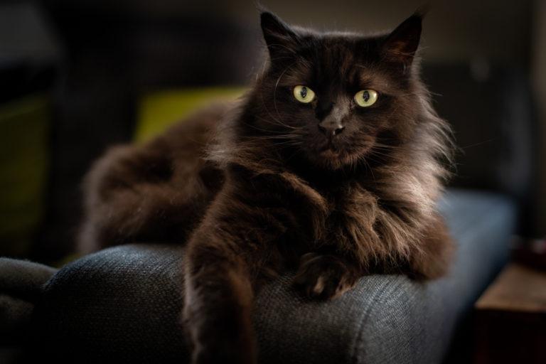 Tomcat Charlie
