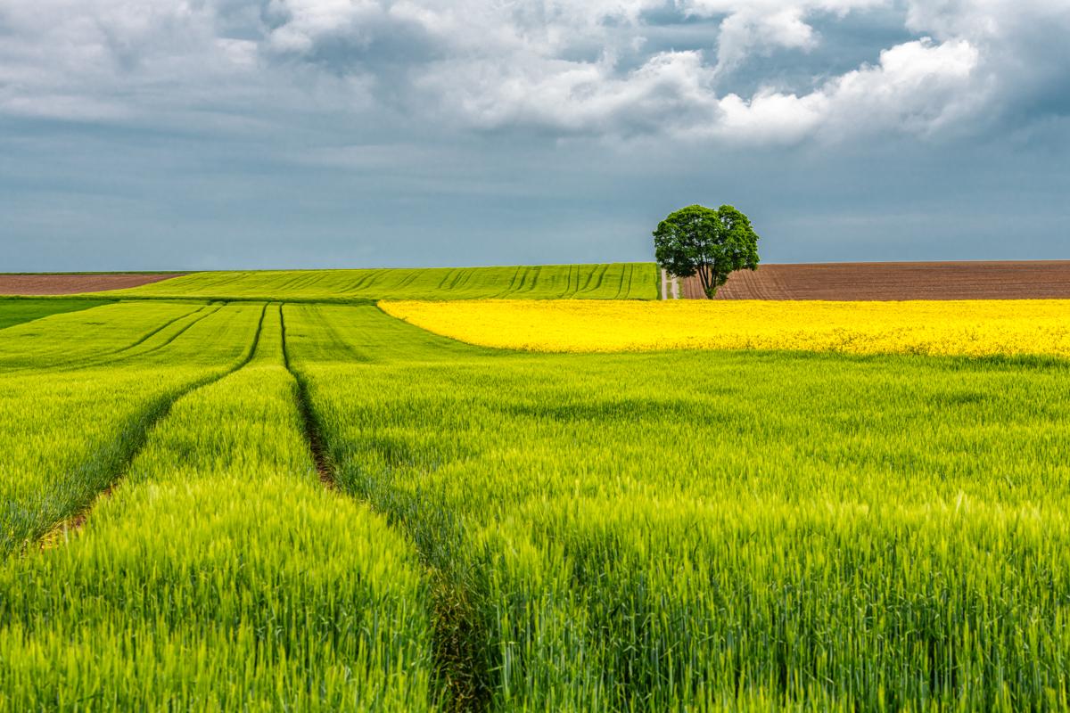 Colour in Landscape