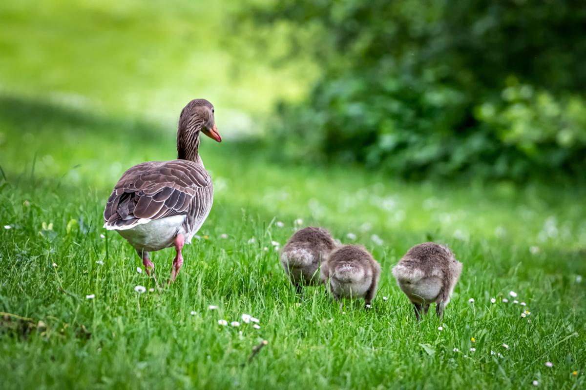 Family Picknick
